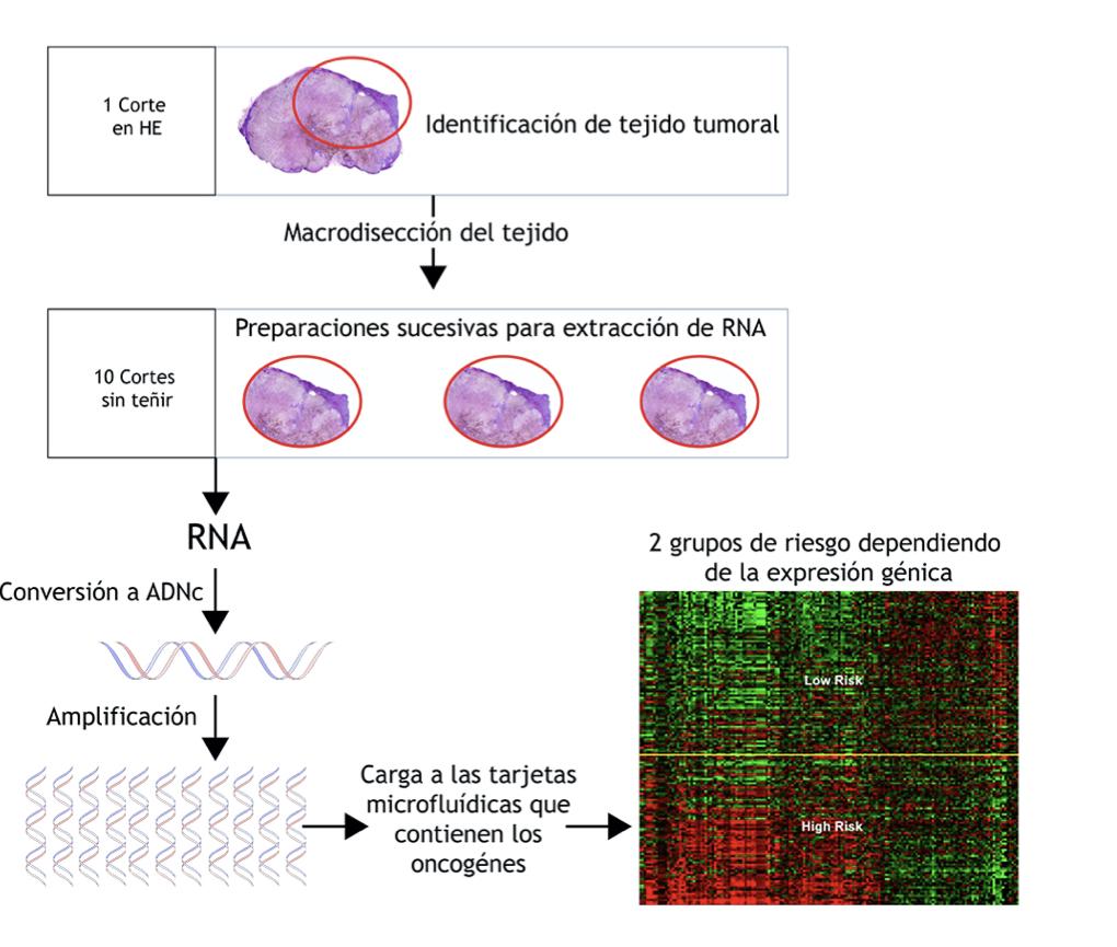 Pronóstico en melanoma expresión génica